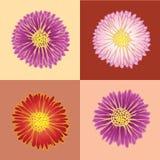 Quatre chrysanthemums. Photo stock