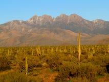Quatre crêtes et supports de cactus de Saguaro Photographie stock libre de droits