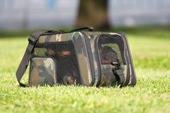 Quatre crabots dans un sac de transport Images libres de droits