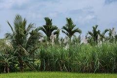 Quatre cultures en une photo, Senapathihalli, Inde Image libre de droits