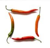 Quatre de poivre de Cayenne Image stock