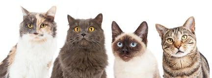 Quatre diverse race Cat Closeups images libres de droits