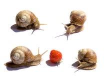 quatre escargots image stock