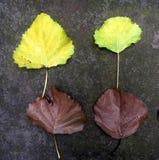 Quatre feuilles tombées sur la terre moussue images libres de droits