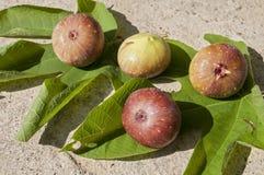 Quatre figues sur des feuilles Image stock