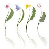 Quatre fleurs. Vecteur Photographie stock