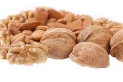 Quatre genres de noix populaires Photographie stock libre de droits