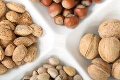 Quatre genres de noix populaires Image libre de droits