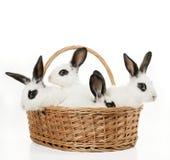 Quatre lapins mignons image libre de droits