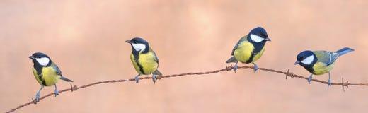 Quatre mésanges Image libre de droits