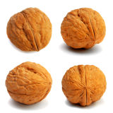 Quatre noix Image stock