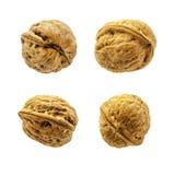 Quatre noix sur un fond blanc Photo libre de droits