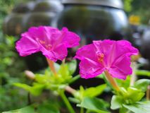 quatre o&#x27 ; fleurs d'horloge photographie stock