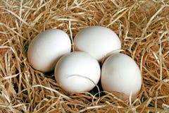 Quatre oeufs de poules Photographie stock