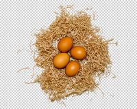 Quatre oeufs se situent dans le nid, le plan rapproché, png photos stock