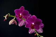 quatre orchidées image stock