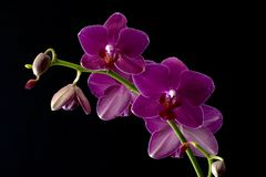 Quatre orchidées images stock
