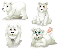Quatre ours blancs adorables Images libres de droits