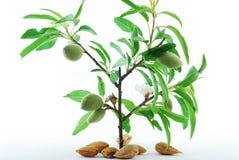 Jeunes plantes d'haricot Photographie stock