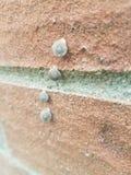 Quatre petits escargots dans une ligne images libres de droits