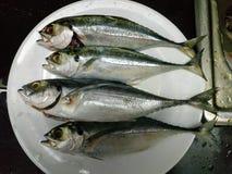 Quatre poisson frais d'un plat rond, préparation image stock