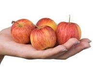 Quatre pommes Photos libres de droits