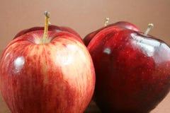 Quatre pommes brillantes. Photo libre de droits