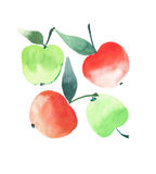 Quatre pommes mûres rouges lumineuses ont isolé le croquis de main d'aquarelle Photographie stock