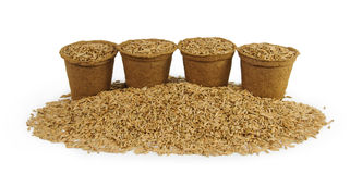 Quatre pots de tourbe remplis de graines d'avoine Photos stock