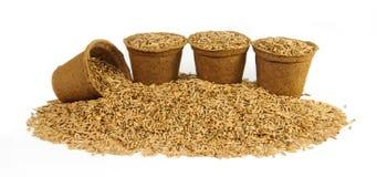 Quatre pots de tourbe remplis de graines d'avoine Photographie stock