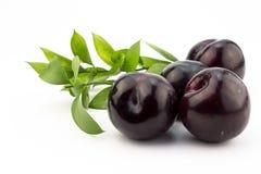 Quatre prunes d'isolement sur le blanc Photo stock