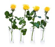 Quatre roses jaunes photos libres de droits