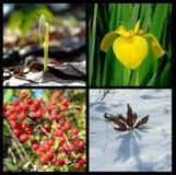 Quatre-saisons Image stock