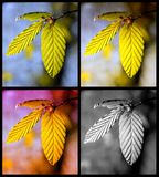 Quatre-saisons Photo libre de droits