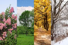 Quatre saisons jaillissent, été, automne, l'hiver Image stock