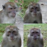 Quatre singes de macaque photographie stock libre de droits