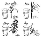 Quatre types de lait végétarien Lait végétal illustration stock