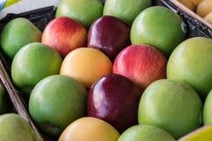 Quatre types différents de pommes mûres dans une boîte Photographie stock libre de droits