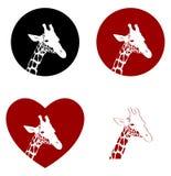 Quatre versions de tête de giraffe Images libres de droits