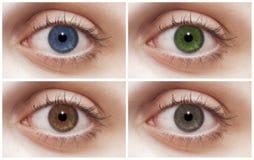Quatre yeux Photographie stock