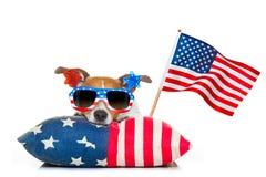 Quatrième de chien de Jour de la Déclaration d'Indépendance de juillet Photographie stock libre de droits