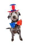 Quatrième de chien de juillet Terrier Image libre de droits