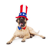 Quatrième de mastiff de chapeau et de lien de juillet Photographie stock libre de droits