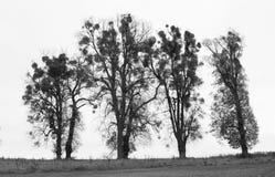 Quatro árvores gráficas Fotos de Stock Royalty Free