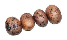 Quatro batatas, fervidas junto com uma casca Foto de Stock Royalty Free