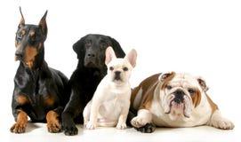 Quatro cães imagem de stock