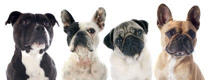 Quatro cães fotografia de stock