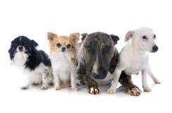 Quatro cães fotos de stock royalty free