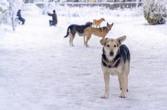 Quatro cães dispersos no inverno e no ser humano tomam fotos no fundo O conceito de todos ama ter nevar imagem imagens de stock royalty free