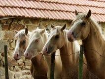 Quatro cavalos fotografia de stock